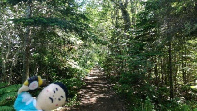 恋人の小径とお化けの森