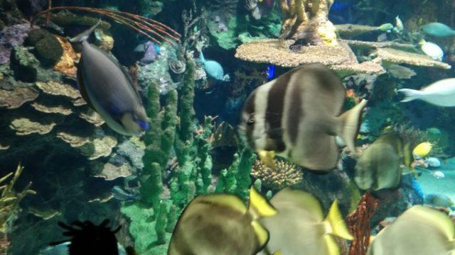 熱帯魚もたくさんいる