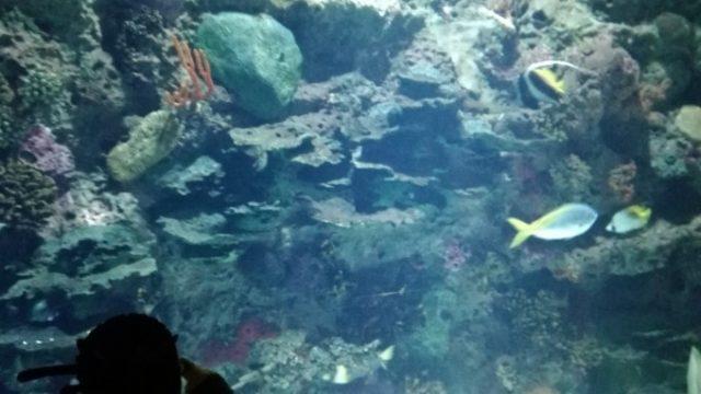 お魚さんもたくさんいる