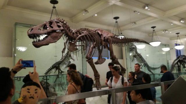 恐竜の化石もたくさんあるぞ
